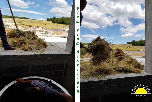 view from distillery helichrysum italicum farm