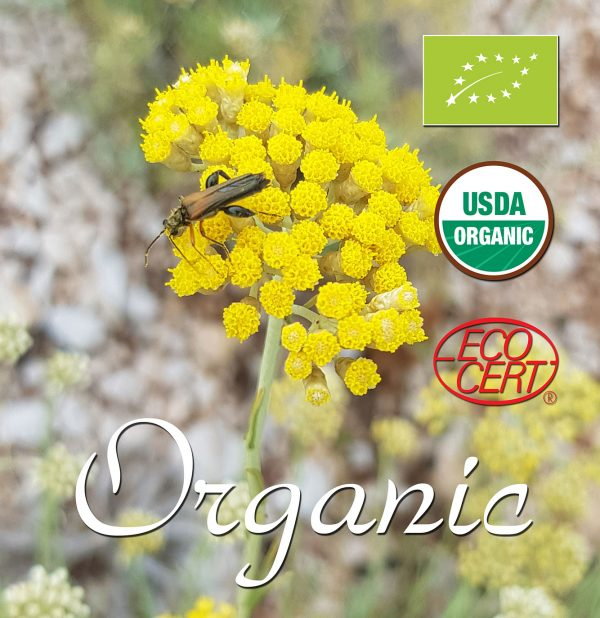 Organic certificated essential oil helichrysum